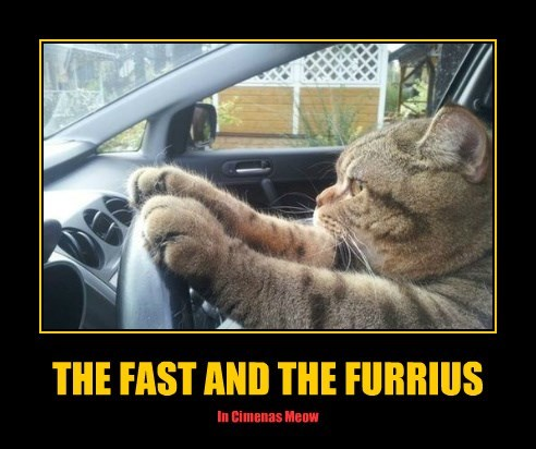 The fast and the furrius