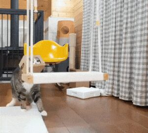 606110f4e199b_Cat-playing-with-his-swing.jpg